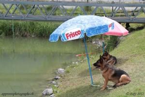 Une vie de chien…