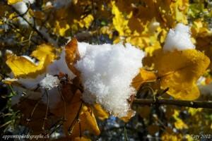 Des cristaux de neige sur des feuilles aux couleurs de l'automne