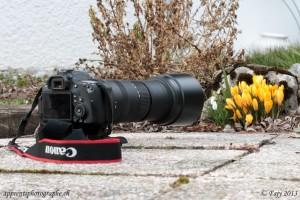 Le Sigma 150-500mm mis en scène, photographiant des crocus