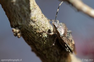Insecte photographié avec un objectif macro de 100mm