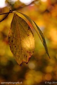 Le soleil joue avec les nervures d'une feuille