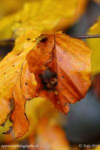 Toutes les belles couleurs de l'automne représentées dans cette feuille
