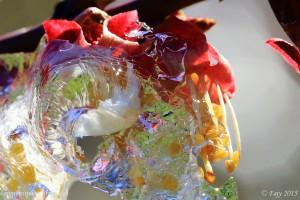 Offrant un magnifique kaléidoscope de couleurs