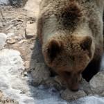 Juraparc, Mont d'Orzeires, les ours