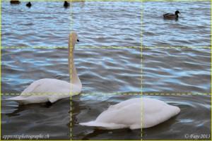 Die Drittelregel - Schwäne am Ufer des Neuenburgersees
