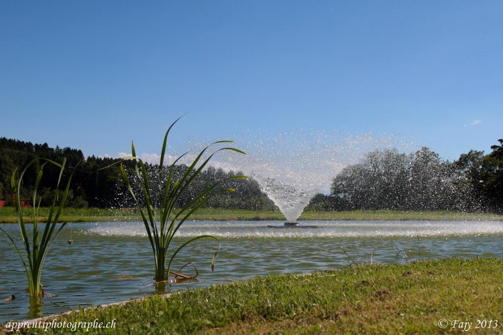 L'étang du gîte du Gros Essert près de Rue