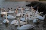 Les oiseaux se sont regroupés, prêts à attraper le pain sec donné par les riverains
