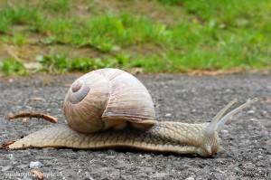 Un Smartphone prend des photos à la vitesse d'un escargot mais souvent avec des résultats honorables