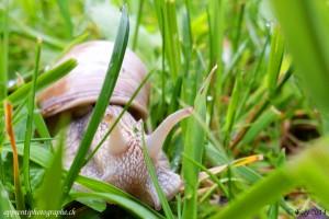 Jeu de cache-cache dans les herbes