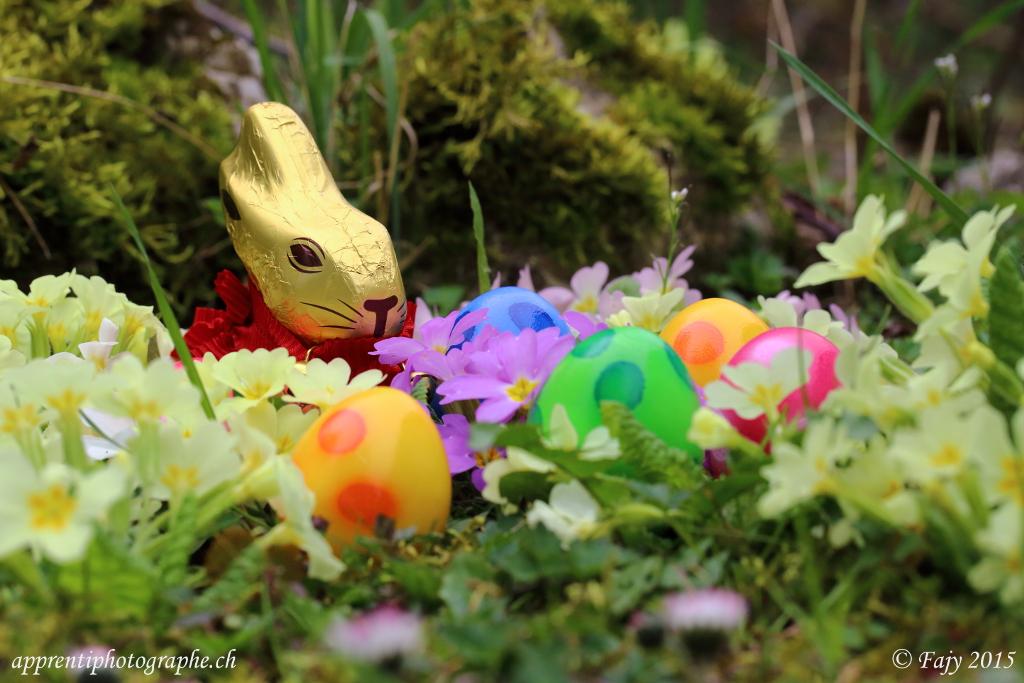 Le lapin gardien approche sans bruit afin de compter ses oeufs
