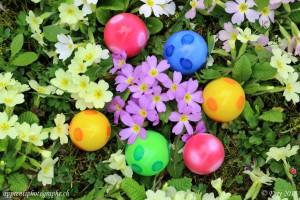 Une belle découverte dans le jardin, un nid d'oeufs de Pâques parmi les primevères
