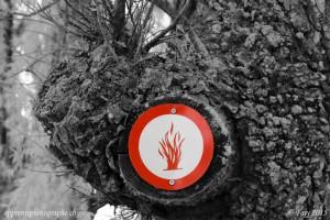 Un panneau d'interdiction de faire du feu bichromatique