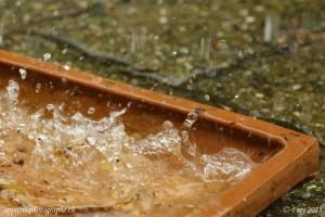 Tempête dans une soucoupe d'eau