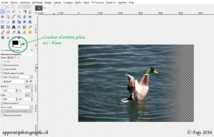 L'image d'un canard avec un effet de transparence vue dans Gimp